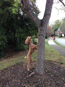 Poodle, Dog, Poodle Hunting Squirrel