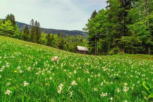 Landscape, Scenic, Meadow, Flowers, Wildflowers, Sky