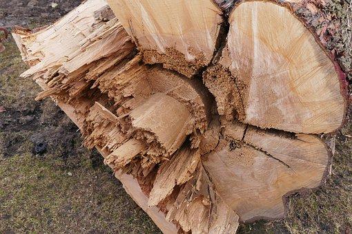 Morscher, Tree, Lazy, Wood, Morsch, Log, Old