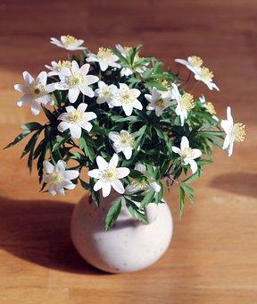 Wood Anemone, Spring, Flowers, Bouquet, Vase