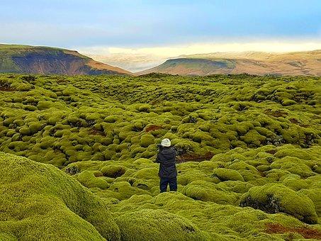 Lava Field, Moss Field, Eldhraun, Iceland, Wonderland