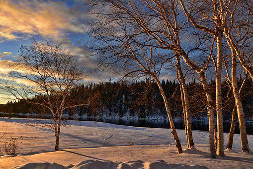 Winter Landscape, Snow, Birch, Frozen Lake, Nature