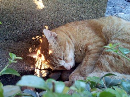 Cat, The Sleeping, Asleep, Relaxing, Sleep, Relax