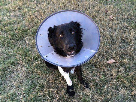 Cone Of Shame, Puppy, Animal, Canine, Cone, Cute, Dog