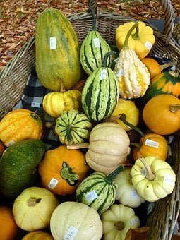 Squash, Pumpkin, Gourd, Marrow, Sell, Basket, Orange