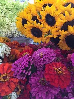 Flowers, Sunflowers, Zinnias, Farmers Market, Growers