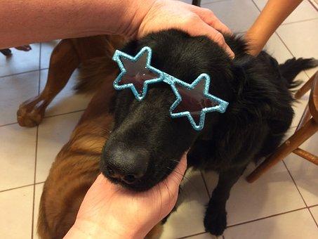 Dog, Puppy, Sunglasses, Animal, Pet, Cute, Canine