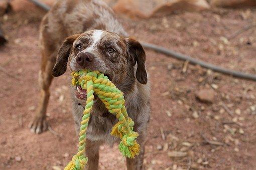 Dog, Play, Tug, Rope, Dog Playing