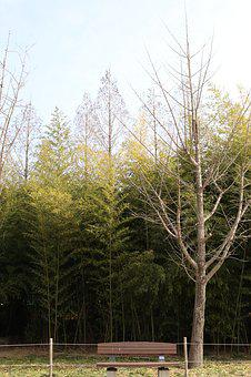Park, Bench, Seoul Forest, Nature, Walk, Landscape