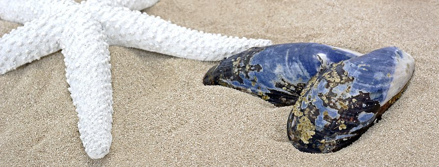 Shell, Mussel, Starfish, Sand, Beach, Maritime