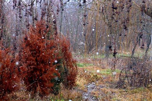 Landscape, Snowflakes, Autumn, Winter, Coloring