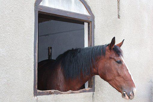 The Horse, The Head Of A Horse, Mount, The Mane, Konik