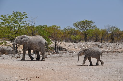 Namibia, Desert, Travel, Jumbo, Elephant