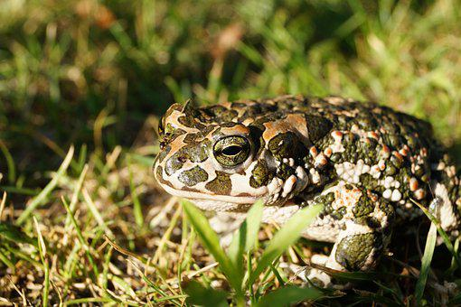 Green, View, Brown, European, Frog, Grass, Sunshine