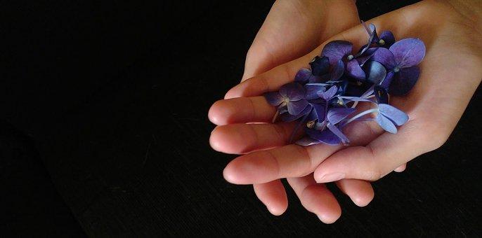 Violet Flowers, Hand, Flowers, Violet, Negative Space