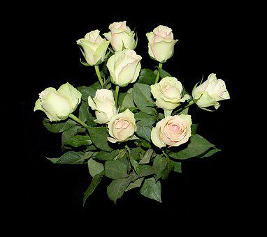 Roses, Flowers, Background, Beautiful, Bouquet, White