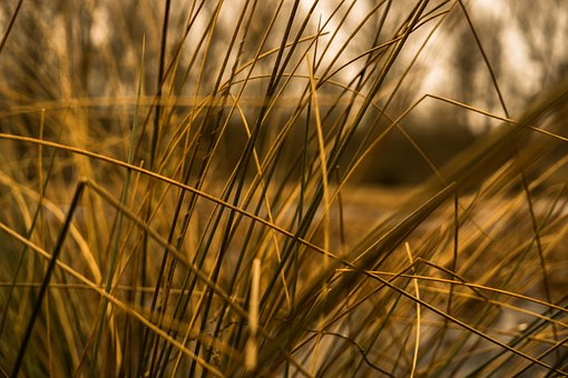 Grasses, Halme, Stalk, Close, Blades Of Grass, Nature