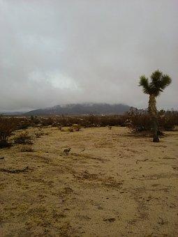 Joshua Tree, Desert, California