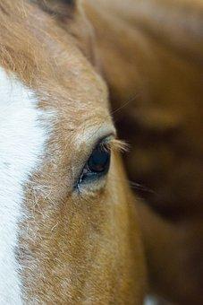 Horses, Stables, Equestrian, Cowboy, Colt, Field