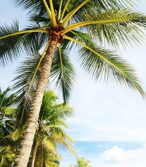 Palm Tree, Holiday, Miami Beach, Florida, Green, Beach