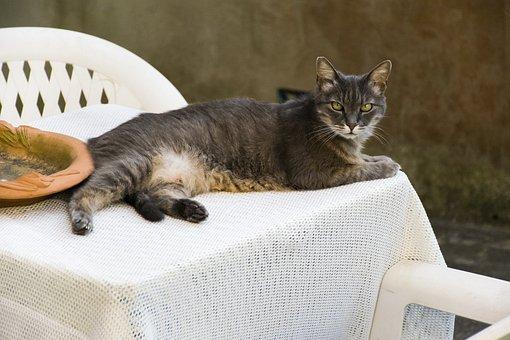 Italy, Capraia, Mediterranean, Cat
