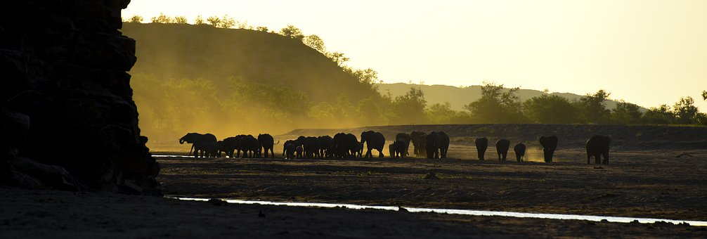 Elephant, Africa, Travel, Safari, Nature, Animal