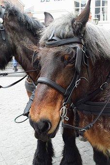 Horse, Bergen Op Zoom, Netherlands, Animals, Animal