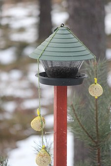 Feeding The Birds, Great Tit, Winter, Rantasalmi
