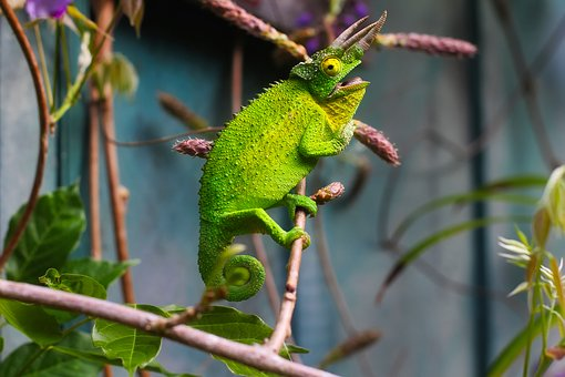 Lizard, Horns, Horned, Reptile, Wildlife, Zoo, Green