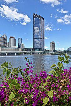 Skyscraper, Plant, Purple, Brisbane, River, Skyline