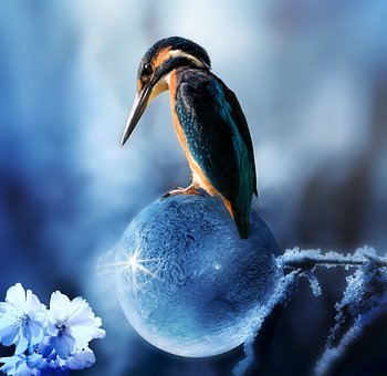 Composing, Kingfisher, Bird, Spring, Spring Is Coming