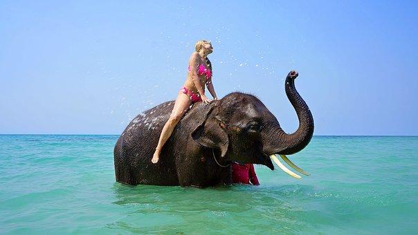 Riding On An Elephant, Bathing, Sea, Girl, Travel