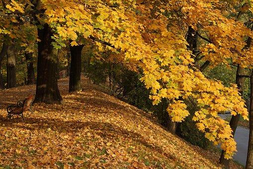 Autumn, Autumn Gold, Foliage, Gold, Yellow Leaves