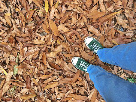 Fallen Leaves, Autumn Leaves, Dried Leaves