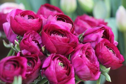 Pentecost, Peony, Bush, Blossom, Bloom, Flower, Spring