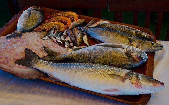 Fish, Sea, Fisherman, Water, Fishing, Lake, Nature