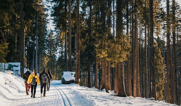 Forest, Hiking, Winter, Nature, Forests, Landscape