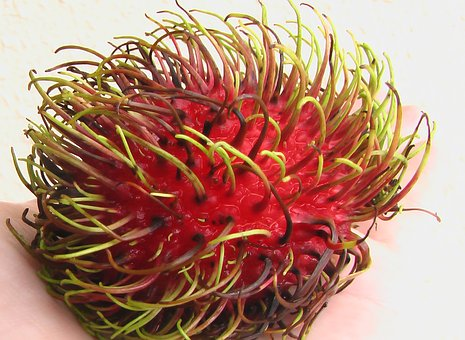 Rambutan, Ngo, Fruit, Red, Asia