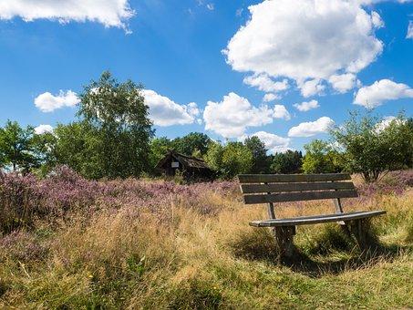 Heide, Bench, Nature Reserve, Heathland, Lüneburg Heath