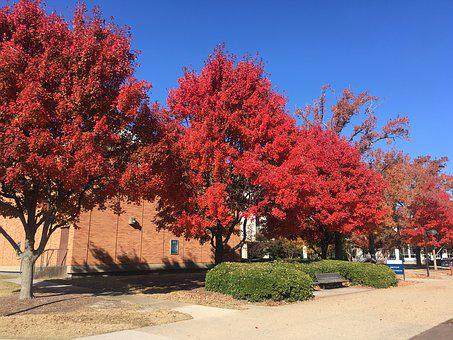 Old Dominion University, Fall, Trees, Leaves