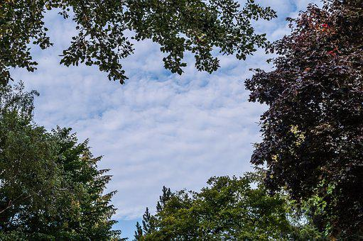 Trees, Canopy, Sky, Summer, Clouds, Heart, Nature