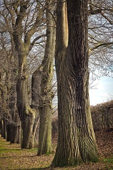 Trees, Old, Old Tree, Nature, Wood, Forest, Log, Oak