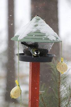 Feeding The Birds, Winter, Rantasalmi, Finnish