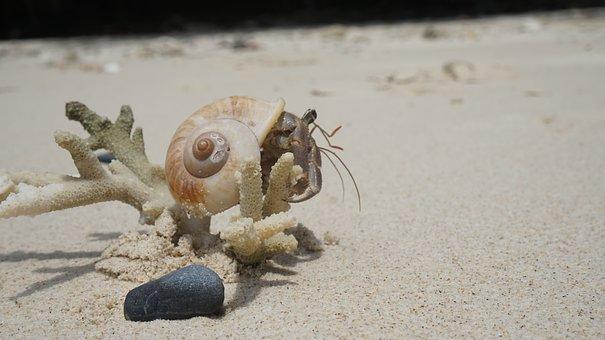 Crab, Seashell, Sand, Beach, Scallop, Sandy Beach