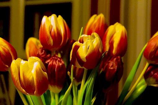 Tulips, Spring, Strauss, Spring Flower, Tulip Bouquet
