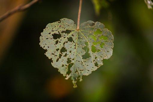 Love, Holes, Heart, Shape, Valentine, Texture, Summer
