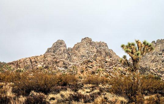 Usa, Joshua, Arizona, Desert, Nature, California