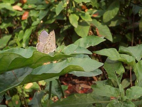 Bush, Autumn Leaves, Butterfly, White Butterfly, Green
