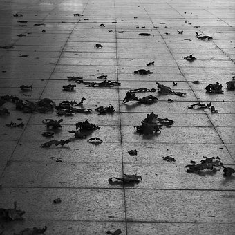 Leaves On Pavement, Autumn, Black And White