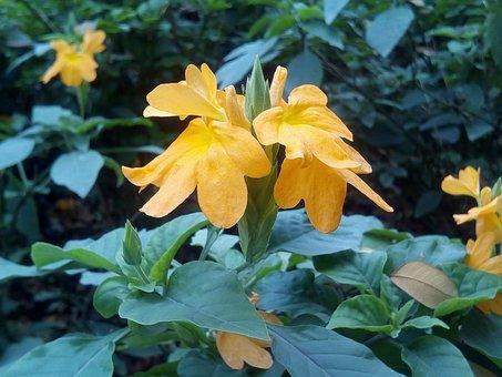 It Leaves Flowers Sagkrni, Flowers